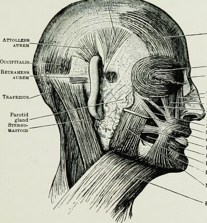 Wrinkles Around The Mouth Surgery